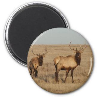 E0001 Bull Elk 6 Cm Round Magnet