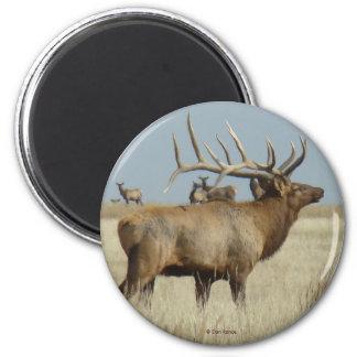 E0004 Bull Elk 6 Cm Round Magnet