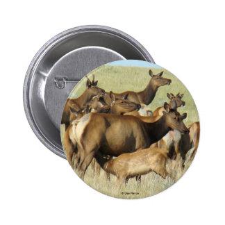 E0007 Cow Elk Feeding Calf button