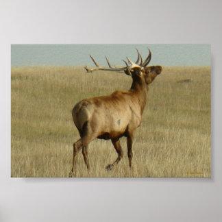 E0035 Bull Elk poster