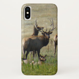 E0036 Bull Elk and Cows Iphone 8/7 phone case