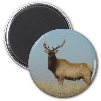 E0043 Bull Elk magnet