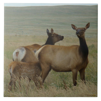 E0061 Cow Elk and Calf Large Square Tile