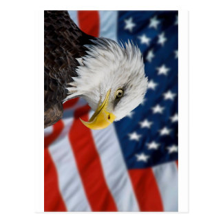 Eagle and Flag Postcard