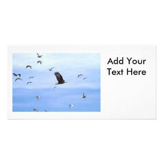 Eagle and Seagulls Flying Custom Photo Card