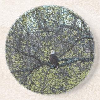 Eagle Awareness Coaster