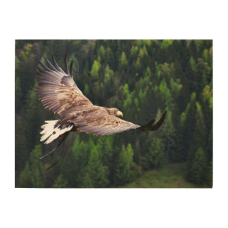 "Eagle Eye View 24""x18"" Wood Canvas"