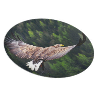 Eagle Eye View Party Plates