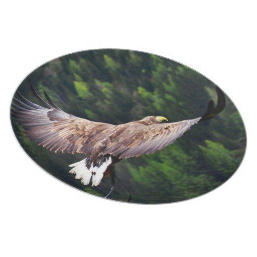 Eagle Eye View Party Plates