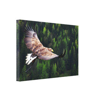 Eagle Eye View Stretched Canvas Print