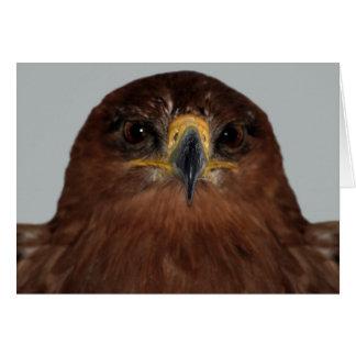 Eagle eyes and head card