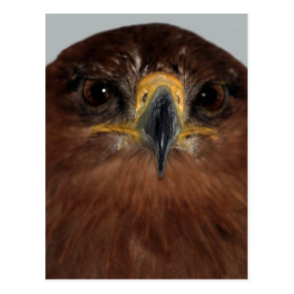 Eagle eyes and head post cards