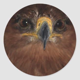 Eagle eyes and head round stickers