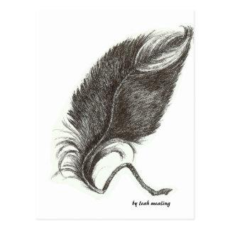 Eagle feather postcard