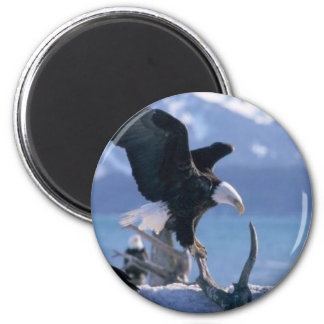 eagle fly2 magnet