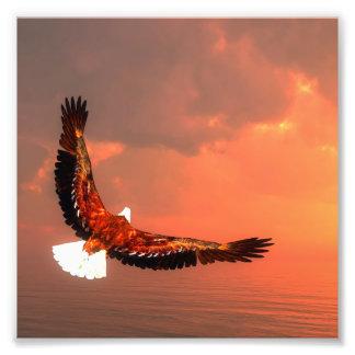 Eagle flying - 3D render Photo Print