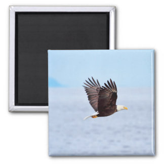 Eagle in Flight Magnet