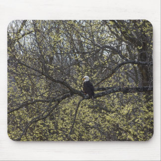 Eagle Lookout Painterly Mouse Pad