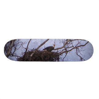 Eagle Lookout Painting Skate Boards