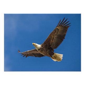 Eagle Overhead Photo Print