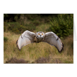 """Eagle Owl """"Coming at You"""" Card"""
