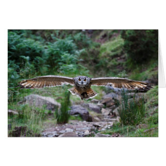 Eagle Owl. Forward Motion Card