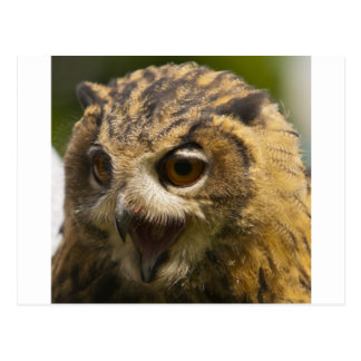 eagle owl.jpg postcard