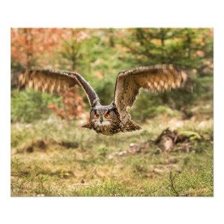 Eagle Owl Photo Print