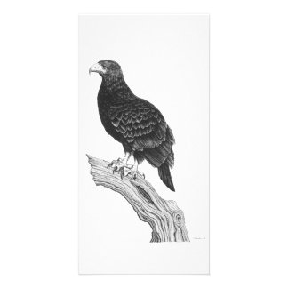 Eagle -Photo Card
