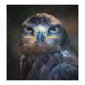 Eagle Portrait Photo Print