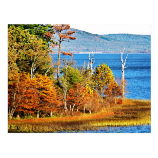 Eagles on Sardis Lake Postcard