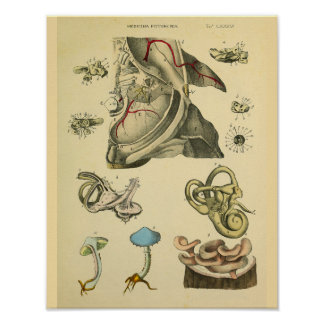 Ear Anatomy Blue Mushrooms Medical Art Print