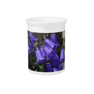 Earleaf bellflower (Campanula cochleariifolia) Beverage Pitchers