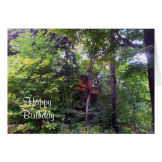 Early Autumn Tree in Woods Card