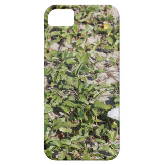 Early Beach Sand Morning Glories Case For The iPhone 5