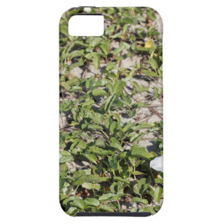 Early Beach Sand Morning Glories Tough iPhone 5 Case