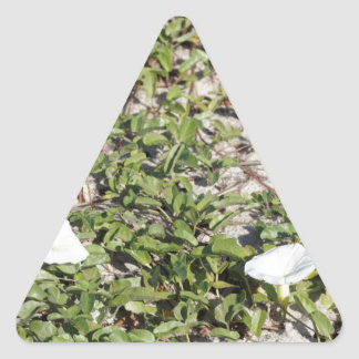 Early Beach Sand Morning Glories Triangle Sticker