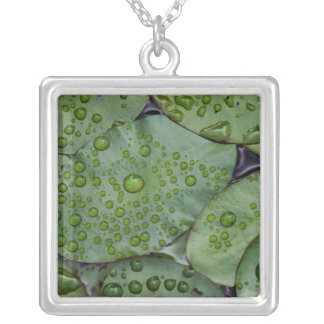 Early morning dewdrops on lily pads, Laurel Square Pendant Necklace