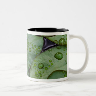 Early morning dewdrops on lily pads, Laurel Two-Tone Mug