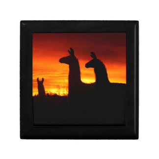 Early Morning Llamas Gift Box