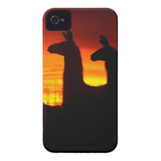 Early Morning Llamas iPhone 4 Case