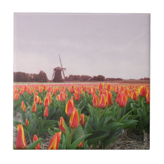 Early Morning Orange Tulip Field Windmill Holland Small Square Tile