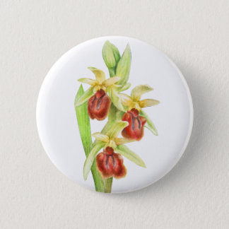 Early spider orchid watercolor art button badge