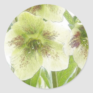 Early Spring Blooms - Hellebores! Round Stickers
