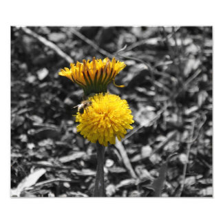 Early Spring Pollination Photographic Print