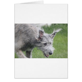 ears in motion greeting cards