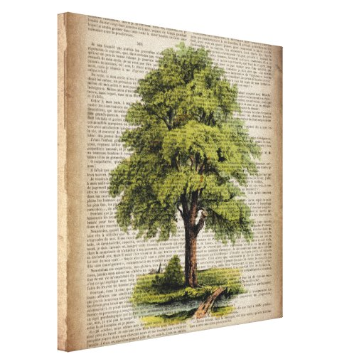 earth day botanical art vintage oak tree stretched canvas prints