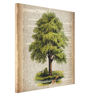 earth day botanical art vintage oak tree gallery wrap canvas