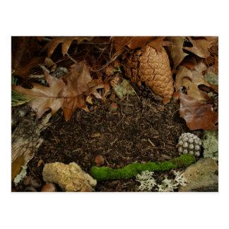 Earthy Forest Floor Postcard