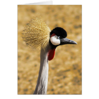 East African Crowned Crane Card